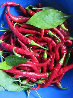 The Rusted Vegetable Garden: How to Oven Dry/Dehydrate Cayenne Peppers from the Garden (In Pictures) Cayenne Pepper Recipes, Cayenne Peppers, Fruits And Veggies, Vegetables, Serrano Pepper, Dehydrated Food, Dehydrator Recipes, Canning Recipes, Stuffed Hot Peppers