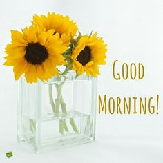 Everybody keeps searching for good morning images with beautiful flowers wish their friends good morning. In today's post, we have brought you a great collection of good morning images with beautiful flowers. Latest Good Morning, Good Morning Picture, Good Morning Flowers, Good Morning Good Night, Morning Pictures, Good Morning Wishes, Morning Pics, Happy Morning, Funny Good Morning Memes