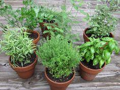Doctor Natura: Ce principii active contin plantele condimentare?