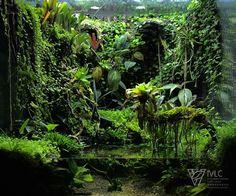 Discover recipes, home ideas, style inspiration and other ideas to try. Planted Aquarium, Aquarium Aquascape, Aquarium Landscape, Nature Aquarium, Aquarium Fish Tank, Tropical Terrariums, Terrariums Diy, Gecko Terrarium, Orchid Terrarium