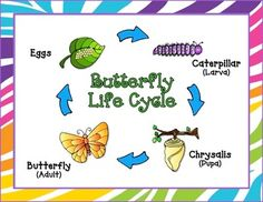 Butterfly Life Cycle Anchor Posters Freebie