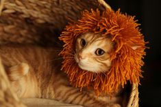 poor baby...why do we do this to them... Ravelry: Cat's Mane pattern by Mer Almagro