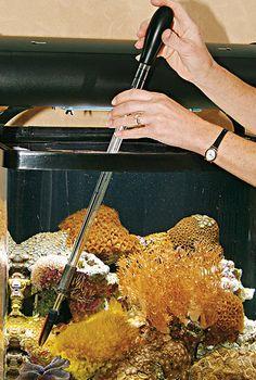 SeaSquirt Feeder