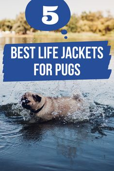 These dog life jackets will fit your Pug puppy or full grown dog. Keep them safe when swimming or spending time around water. Pug Accessories, Life Jackets, Pug Life, Best Dogs, Pugs, Your Dog, Life Is Good, Swimming, Puppies