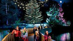 Christmas at Kew 2013