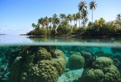 Coral garden, Taha'a, Leeward Islands, French Polynesia. Bora bora island is in the background.