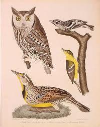 Lea Woodpecker