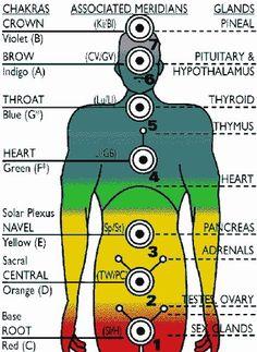 EnergyCenters, Meridians, and glands.... balancedwomensblog.com