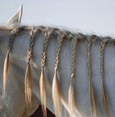 I used to braid my horses mane too.