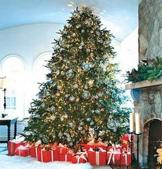 my Christmas tree will be this big with tons of lights and those glittery ornaments. can't wait.
