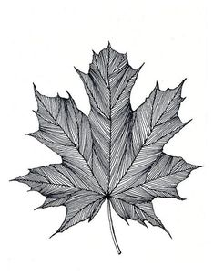 Maple Leaf Print of original Black or Green Pen and Ink DrawingYou can find ink drawings and more on our website.Maple Leaf Print of original Black or Green Pen and . Black Pen Drawing, Doodle Art Drawing, Black Pen Sketches, Drawing Drawing, Pencil Art Drawings, Art Drawings Sketches, Drawing Designs, Stylo Art, Art Du Croquis