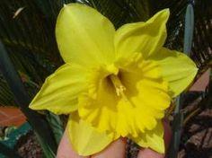 Decoracion con flores naturales