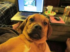 These 23 Dogs Need Some Serious Selfie-Taking Lessons   Diply