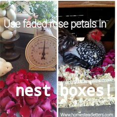 Recycle Flowers In Nest Boxes