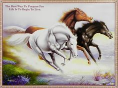 Wild Horse Race (Reprint on Paper - Unframed) Horse Posters, Animal Posters, Horse Artwork, Nature Posters, Wild Horses, Horse Racing, Sculptures, Paper, Pictures