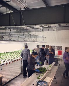 Our December CEA comes to an end today with students learning about #harvesting #transplanting #seeding #packaging within an #nftsystem by official_farmtek