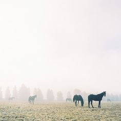 Horses in the morning.