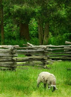 Pictures by polly Country Blue, Country Charm, Country Living, Country Fences, Stiles, Green Grass, Green And Brown, Campers, Sheep