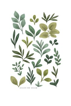 This print of botanical leaf illustrations would make the perfect addition to your home's wall decor or make the perfect gift for your plant lady friend. Leaf Illustration, Floral Illustrations, Digital Illustration, Illustrations Posters, Leaf Prints, Flower Prints, Wall Art Prints, Watercolor Leaves, Watercolor Art
