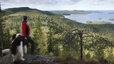 Finland's 'Ten Most Beautiful Landscapes'   VisitFinland.com- Koli in northern Karelia
