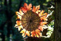 Norwegian Maple Autumn Fire Wheel ~ land art by escher is still alive, aka Richard Shilling