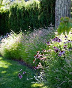 Residential Landscape Design Vancouver. echinacea purpurea and pennisetum grasses modern landscape