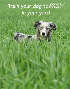 Dog Training Tips: Training your Dog to Stay in the Yard Wouldn't it be nice to know that your dog will stay in your yard instead of roaming? Our dog training tips may be able to help! A fence or other containment system can ensure your dog stays confined Puppy Training Tips, Training Your Dog, Potty Training, Agility Training, Training Collar, Training Classes, Training Videos, Training Equipment, Animales