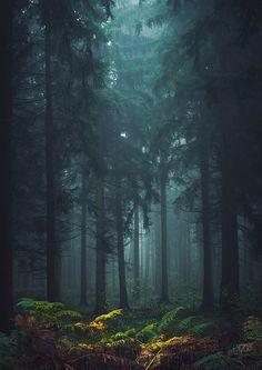 Hier war ich nun schon so oft. Jedoch mit hinter dem Nebel aufkommendem Tageslicht erschien er mir beinahe unbekannt. Kurzum, eine prima Chance auf tolle Fotos!