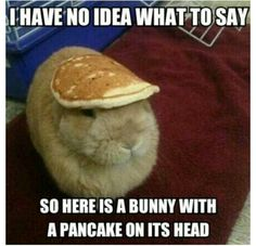 Bunny with a pancake on its head HAHA!