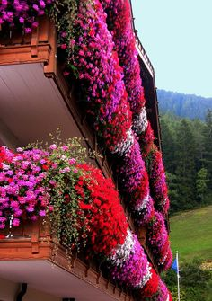 Full Flowered Balcony