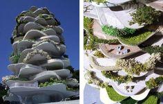 "The ""Urban Cactus"" 