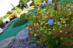 Courtesy of HF Photography Waterfall, Golf, Mini, Outdoor Decor, Plants, Photography, Photograph, Fotografie, Waterfalls