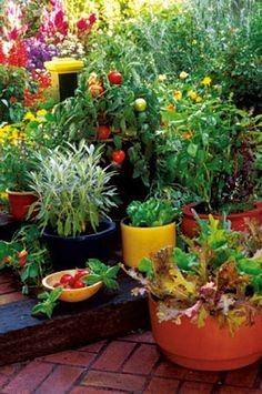 Grow Your Own Container Gardens. You don't have to have land to have a garden full of healthy food. Container gardens can exist in just about any spot that gets good sun, such as a patio, deck or balcony. In fact, some say that a container garden is easier to maintain than a conventional garden. Containers, both traditional and self-watering, allow you to grow just about anything you would normally grow in the ground on a patio, deck or balcony. #containergardens #smallspacegardens