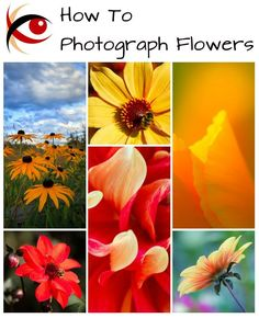 Great Subjects: How to Photograph Flowers - tips for approaching flower photography for more creative and interesting photos that go beyond snapshots.. http://annemckinnell.com #photography #tutorial