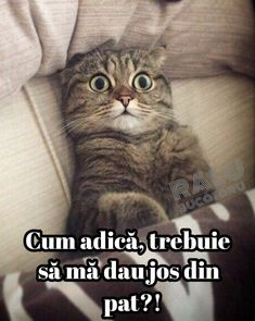 Animals And Pets, Funny Animals, Cat Wallpaper, Stupid Funny Memes, Just For Fun, Cats And Kittens, Funny Cats, Haha, Comedy