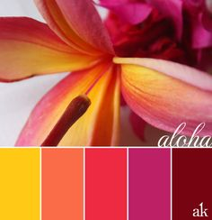 a PINK-plumeria-inspired color palette Wedding colors Colour Pallette, Color Palate, Colour Schemes, Wedding Color Schemes, Color Combos, Summer Colour Palette, Orange Color Palettes, Pink Palette, Summer Wedding Colors