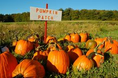Discover Houston pumpkin patches and corn maze spots all around the city with our extensive guide. These are the best patches for photo opps and fun! Pumpkin Patch Corn Maze, Pumpkin Field, Pumpkin Picking, Pumpkin Patches, Pumpkin Patch Houston, Haunted Hayride, Real Estate Tips, Autumn Activities, Stuff To Do