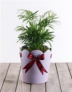 Areca Bamboo in Purple Pottery! Flower Delivery Service, Whats New, Indoor Plants, Bamboo, Planter Pots, Pottery, Purple, Babyshower, Flowers