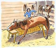 Touch toning equine massage