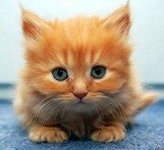 Mini Garfield