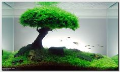 Tree in a meadow... In an aquarium. wagumi-aquascaping   http://www.fixed.org.au/