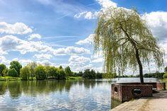#Münster #aasee  #seeufer #baum #landschaft #landscape #landscapephotography #germany #münsterland #münsterliebe #see #lake #summer #sommer