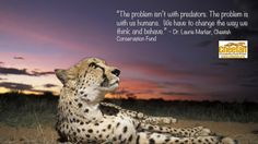 Quote from Chasing Cheetahs:The Race to Save Africa's Fastest Cats by Sy Montgomery.  Dr. Laurie Marker, Executive Director, Cheetah Conservation Fund.