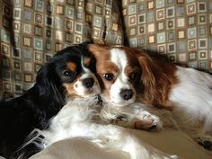 This is Libby and Riley(left to right). We live in Avalon Silicone Valley in Sunnyvale, CA ! We are both Cavalier King Charles Spaniels who love, love love to LOVE YOU!! Riley is know for giving his daddy wet kisses and Libby is just a lover and loves to cuddle. We hope to win the Grand Prize, cus we are cute