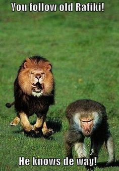Simba and Rafiki! Lion King in real life!!!!