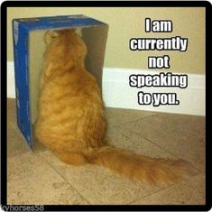 Funny Cat Humor Not Speaking To You Refrigerator Magnet #cuteanimals #pets #funnymemes #cats