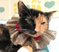 Arya is an adoptable Calico Cat in Huntington, NY. So I wasin a box. Just before that, I was in a home. Then I was taken into this shelter. Nice people here. I don't know why I lost my home. Allergie...