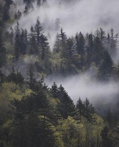 Misty Forest, Forest Mountain, Foggy Forest, Forest Art, Forest Photography, Landscape Photography Tips, Mountain Photography, Photography Flowers, Photography Ideas