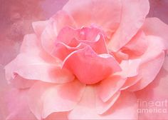 Pink Rose Romance Greeting Card for Sale by Regina Geoghan