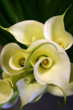 Calla Lilies  My favorite!!!!